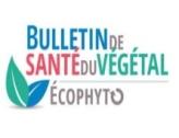 Bulletin de santé du végétal Zones non Agricoles n°04 - 2019